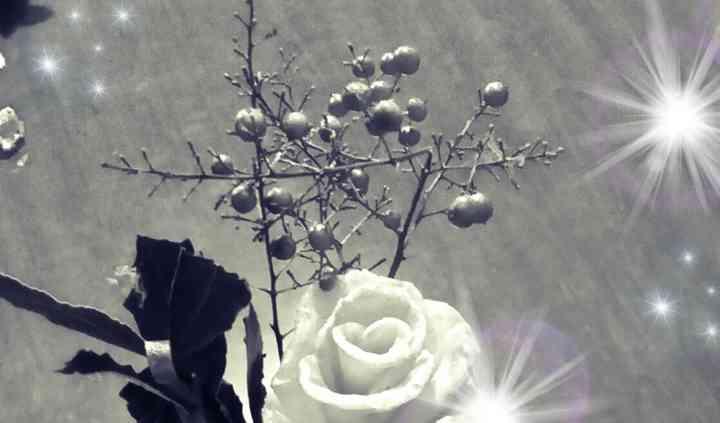 Rose di cera vere