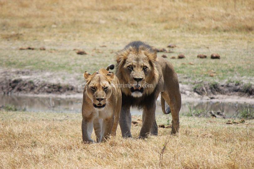 Leoni Parco Chobe Botswana