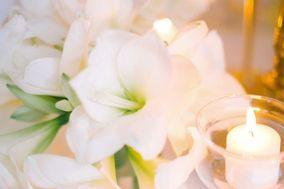 Sintonia Flowers