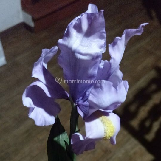 Fiore Iris Porcellana Fredda