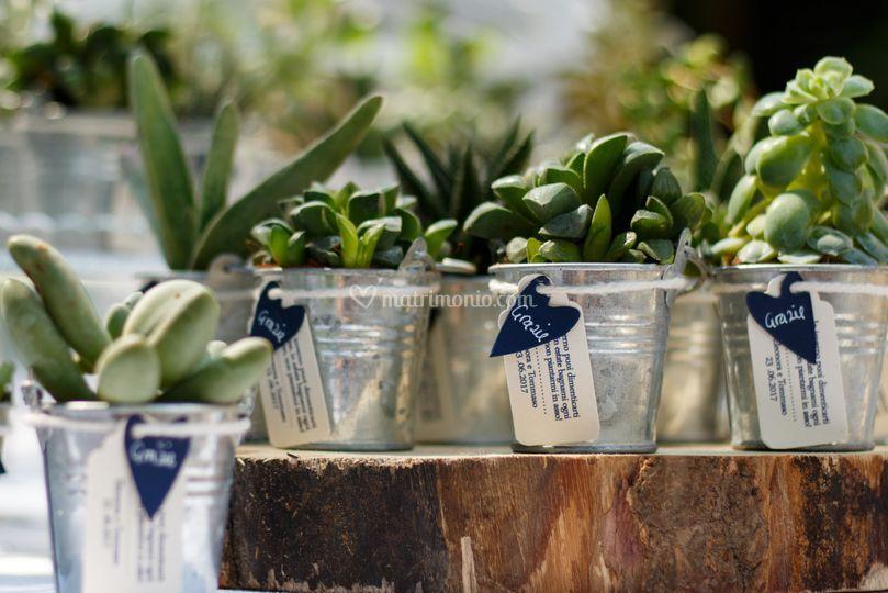 Bomboniere succulente
