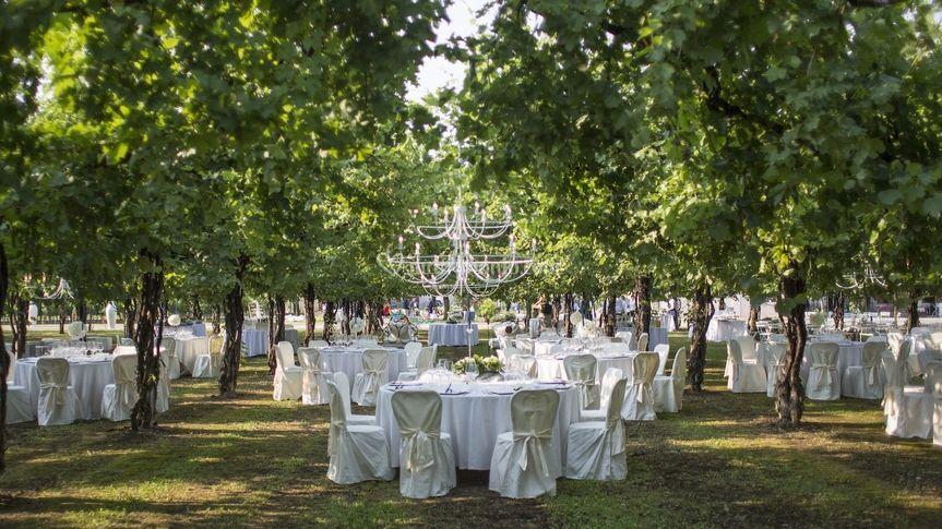 Matrimonio Vigneto Toscana : Matrimonio nel vigneto di santi catering foto