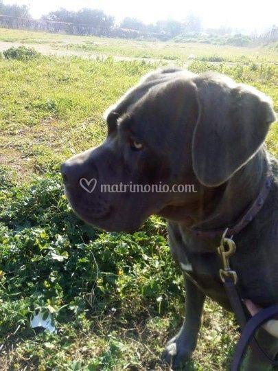 Dog Walker Bari