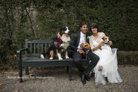 My Wedding Dog Sitter