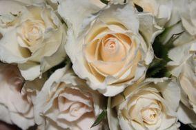 Le Rose di Zucchero Filato
