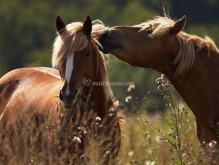 I nostri amati cavalli di cascina del sole risto ranch for Cavalli bolzano
