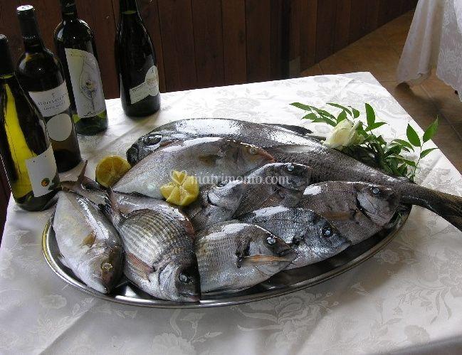 Volo dei gabbiani - Pesci comuni in tavola ...