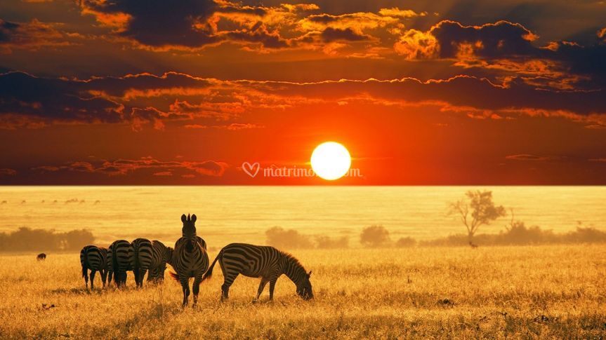 Safari e mare in Africa
