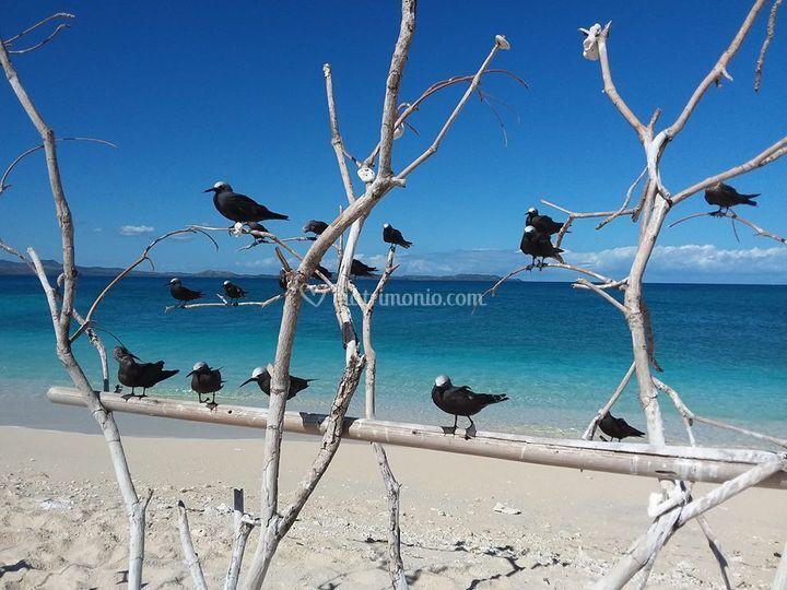 Isola dei coralli - Madagascar