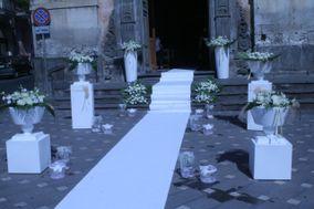 Surfinia Cerimonie