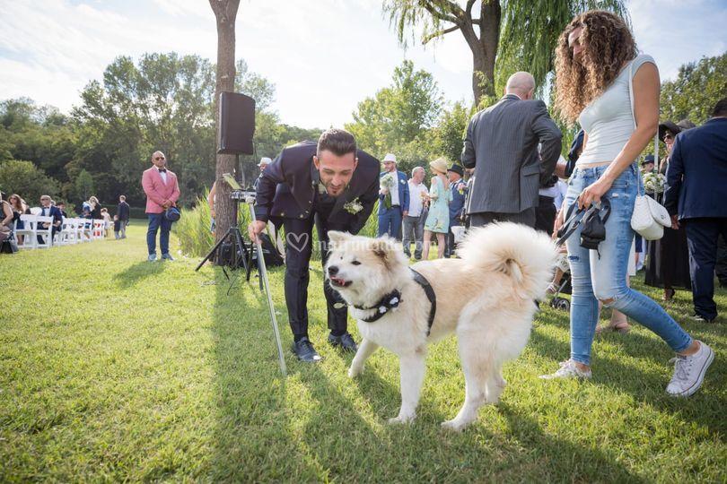 Sara Grecchi - Wedding Dog Sitter