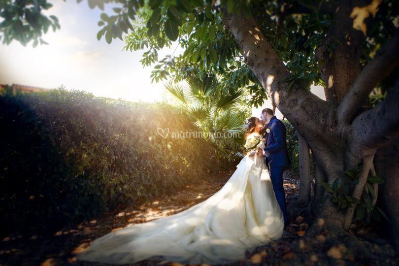 Sposi e albero secolare