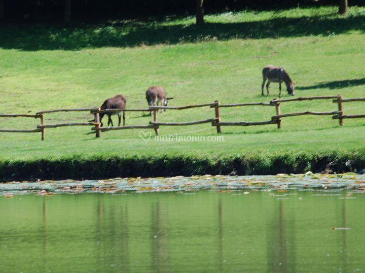 Parco laghetto arquello for Animali laghetto