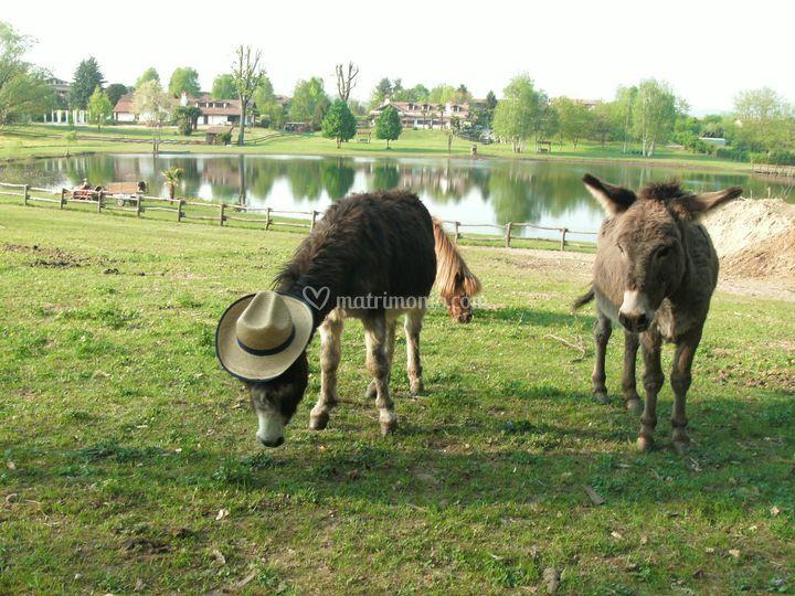 Animali di parco laghetto arquello foto 26 for Animali per laghetto
