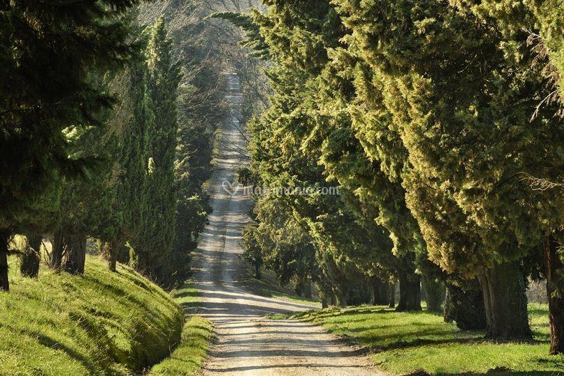 Viale per Villa Manodori