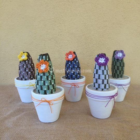 CactusVanda