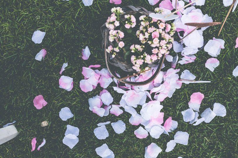 Petali & fiori