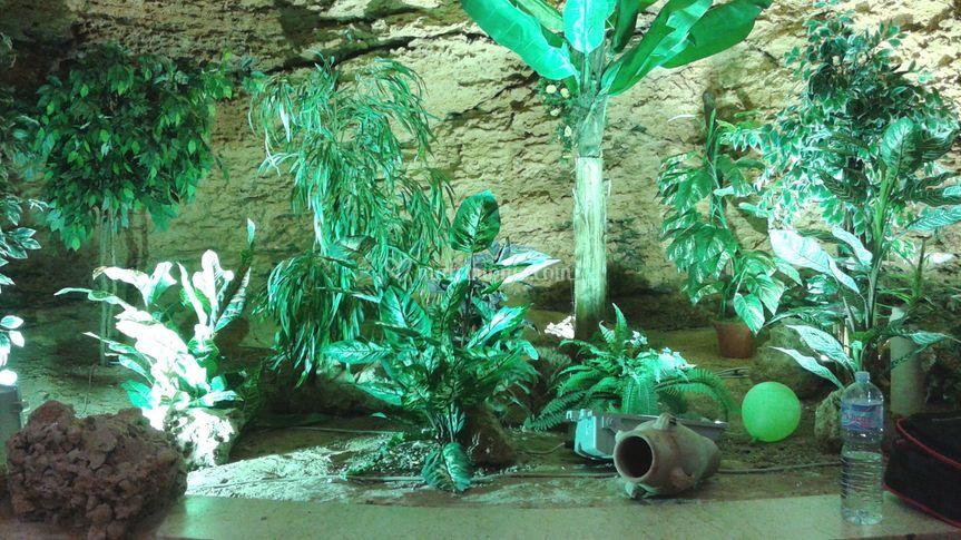 Particolare della grotta