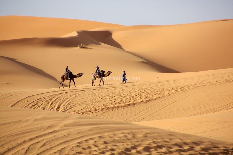 Il fascino del deserto