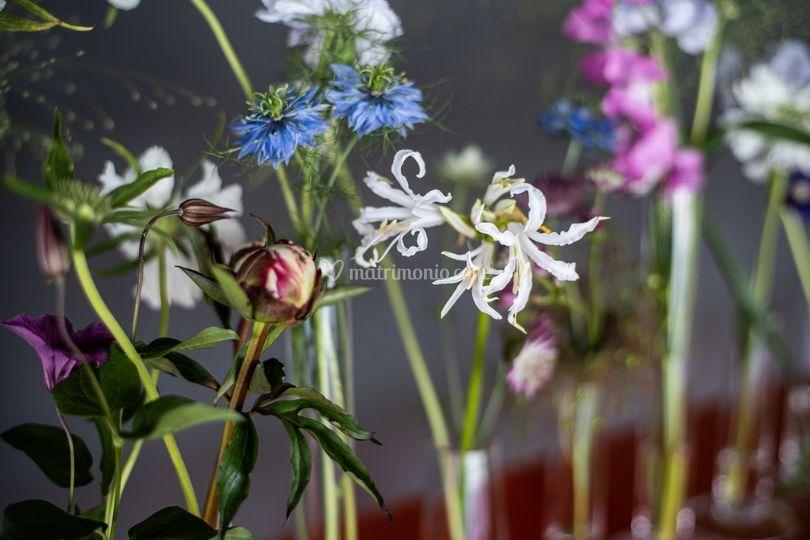 Dahlia Flower Art di Alessia Serdino