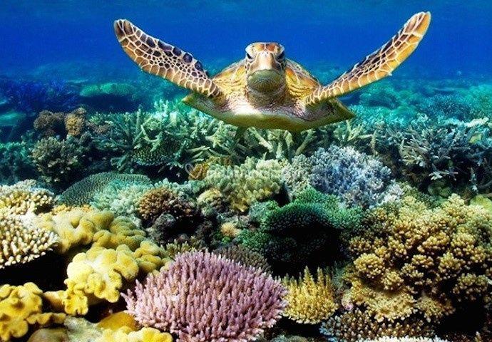 Le migliori barriere coralline