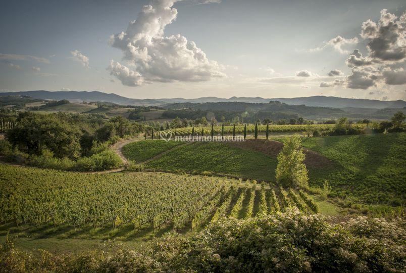 Vista in Vigna