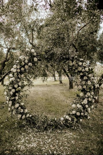 Arco ulivo, fiori bianchi