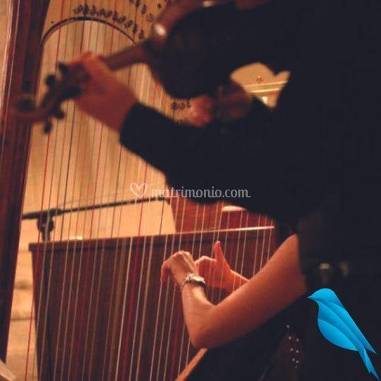 Arpa violino e voce