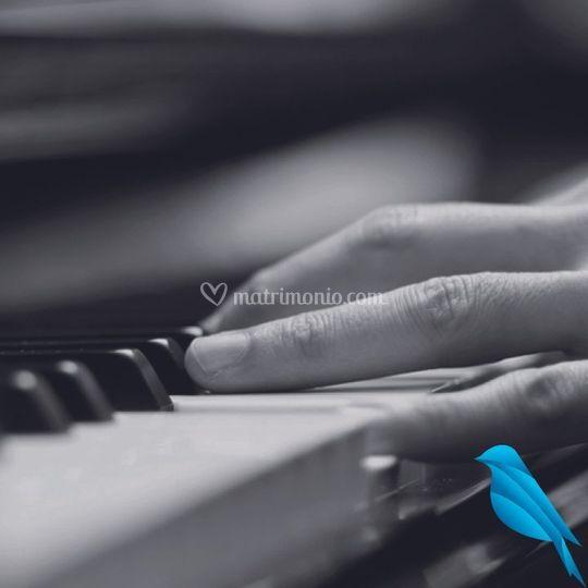 Organo e voce