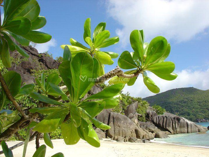 Pennellate di bianco borotalco e cornici di granito alle Seychelles