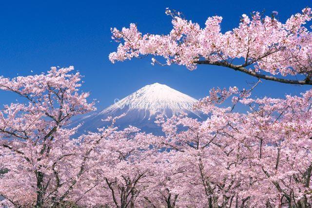Giappone in fiore