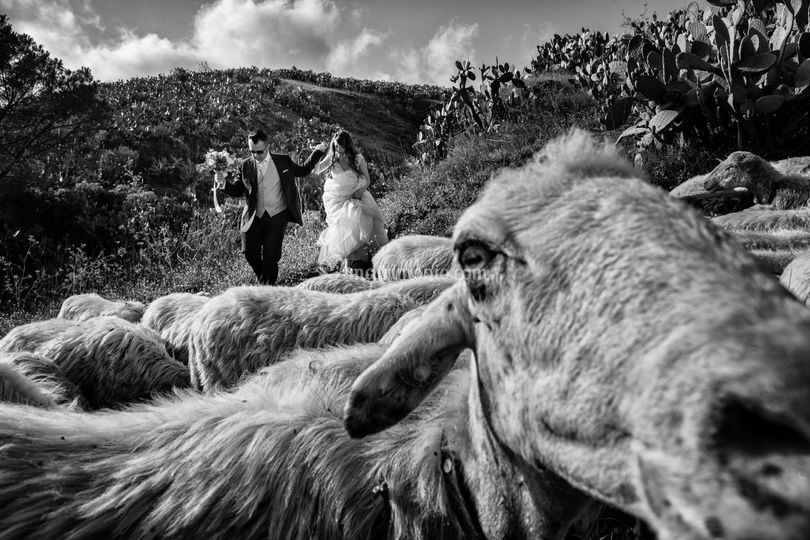 Creative Wedding Reportage