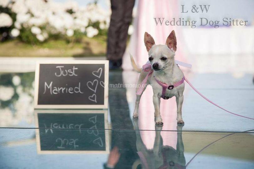 L&W Wedding Dog Sitter