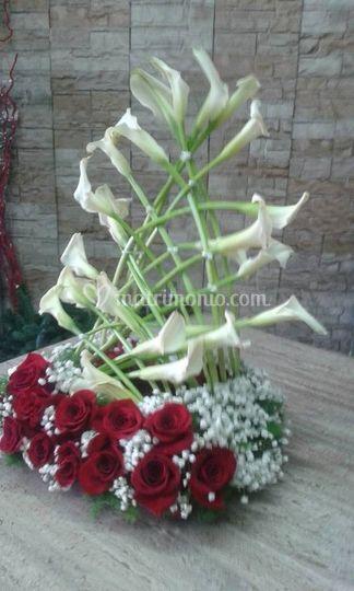 L'Orchidea di Giovanni Carfora