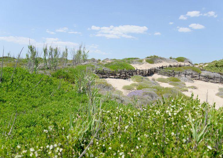 Parco delle Dune 2