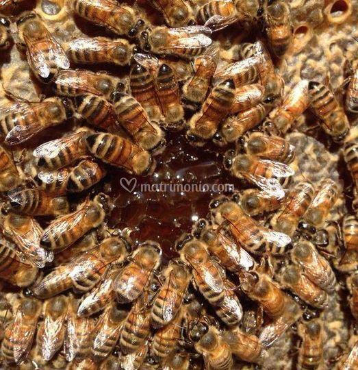 Il dolce miele