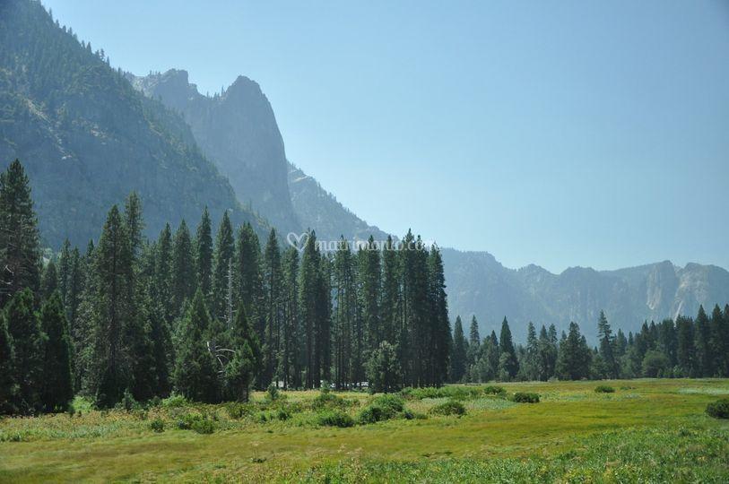 Yosemiti park - California