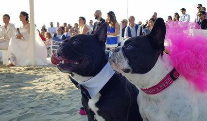 Wedding Dog Service