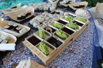 Sushi di Villa Posillipo