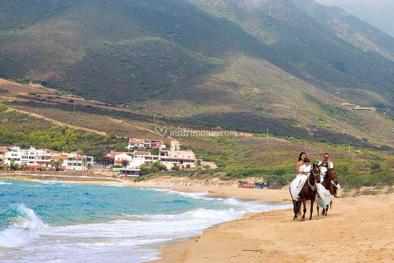 Sardegna Wedding Horses