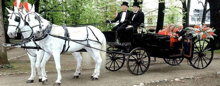 Carrozza e cavalli  matrimonio