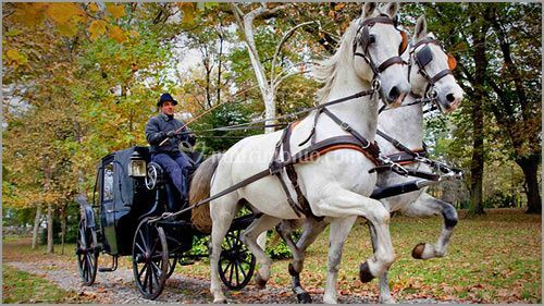 Cavalli bianchi carrozza