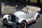 Whippet Bianca 1928