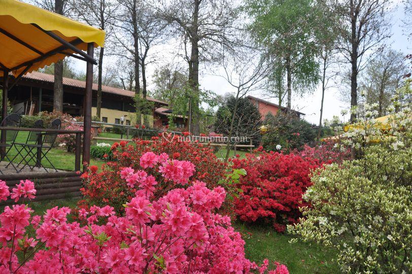 Il parco in fiore