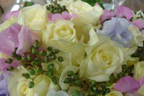 I fiori di Gavi e Stefi