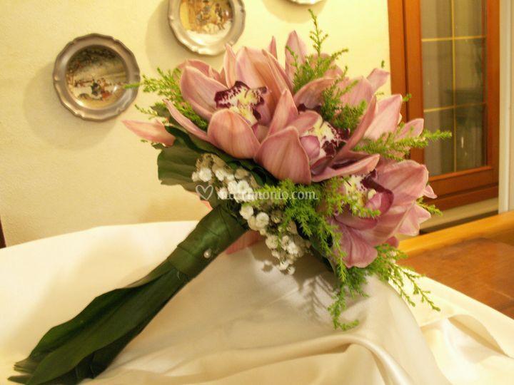 B . Orchidee