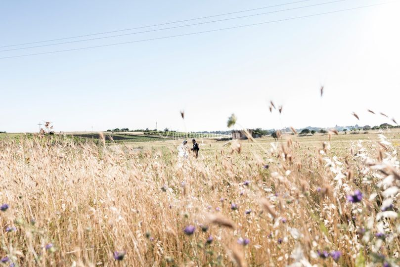 Amore tra i campi