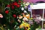 Variet� di fiori di I Fiori di Oxana