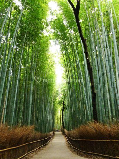 Passeggiata ad Arashiyama