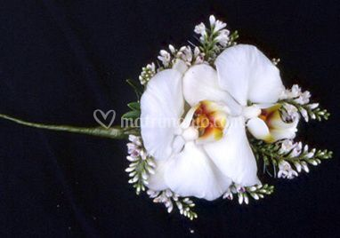 Bottoniere Orchidea